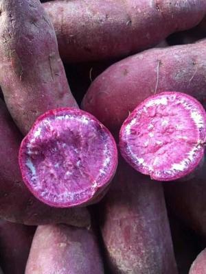 广西壮族自治区防城港市东兴市越南紫薯 混装通货
