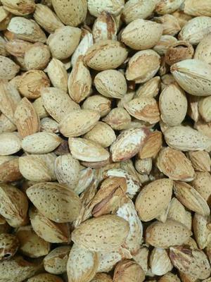 新疆维吾尔自治区和田地区和田县巴旦木 1年以上 带壳