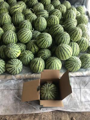 贵州省安顺市紫云苗族布依族自治县麒麟西瓜 有籽 1茬 7成熟 6斤打底