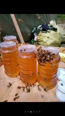 河南省平顶山市鲁山县土蜂蜜 塑料瓶装 100% 2年以上