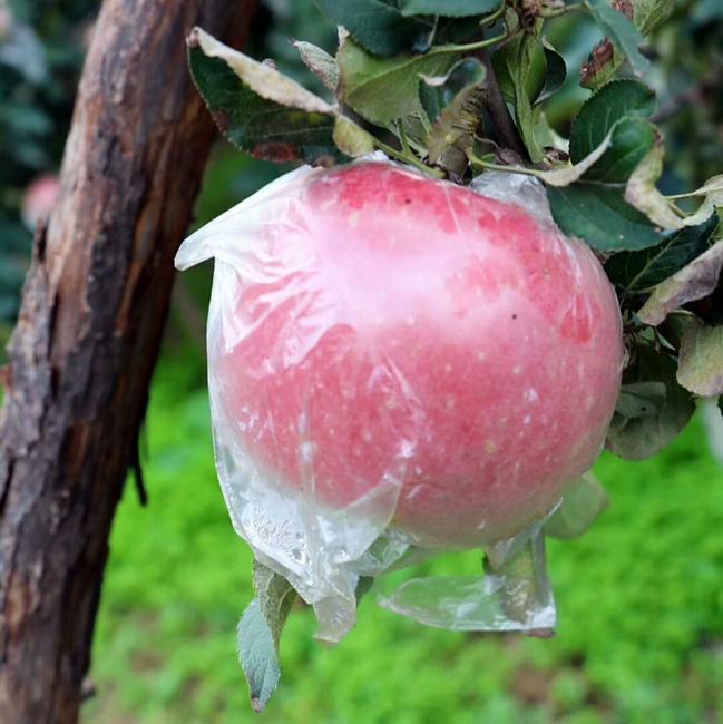 红富士苹果 膜袋 表光 70mm以上