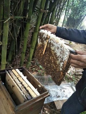 广东省韶关市翁源县土蜂蜜 塑料瓶装 80%以上 1年