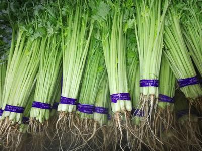 山东省潍坊市高密市香芹 55~60cm 大棚种植 0.5斤以下