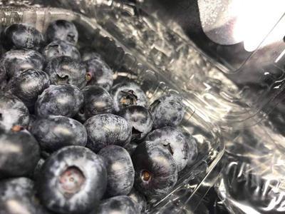 广东省汕头市金平区智利蓝莓 鲜果 6 - 8mm以上