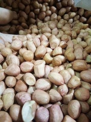 浙江省台州市黄岩区小白沙花生 干货 花生米