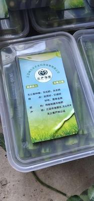 海南省三亚市海棠区水果秋葵 10 - 12cm