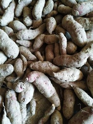 江西省赣州市上犹县紫板薯 0.5-1斤
