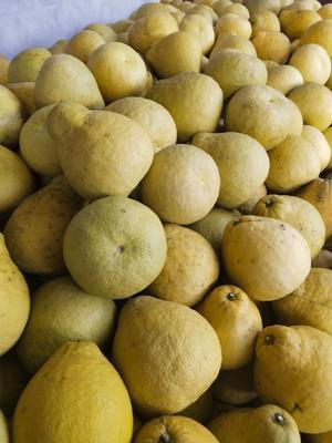 四川省泸州市合江县真龙柚 2斤以上