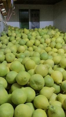 这是一张关于沙田柚 2斤以上的产品图片