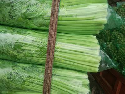 山东省济南市济阳县法国皇后芹菜 55~60cm 大棚种植 0.5斤以下