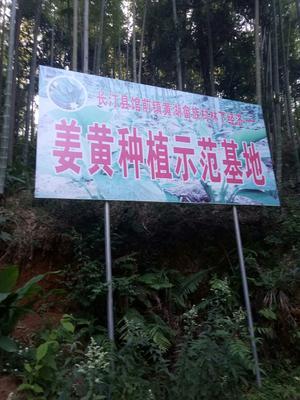 福建省龙岩市长汀县姜黄