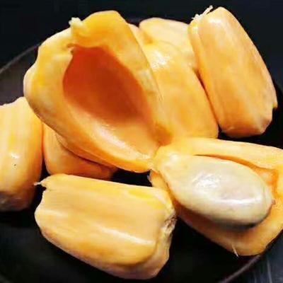 广东省广州市白云区红肉菠萝蜜 10-15斤