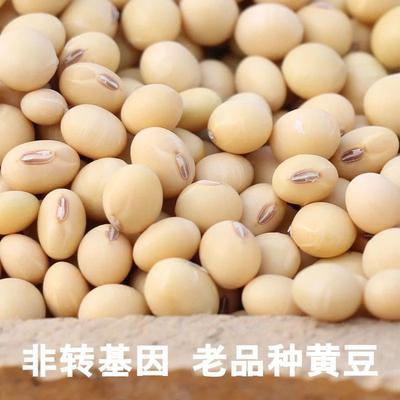 湖南省娄底市娄星区有机黄豆 生大豆 1等品