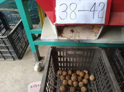 山西省忻州市原平市老树核桃