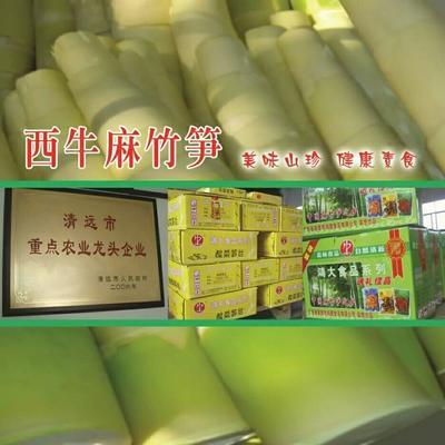 广东省清远市英德市麻竹笋干 散装 1年以上