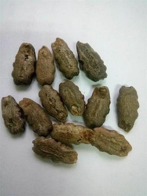 山东省济南市历城区丝瓜种子  蛇瓜种子