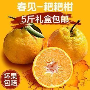 四川省成都市蒲江县耙耙柑 7 - 7.5cm 4两以上