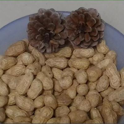 湖南省娄底市娄星区花育16花生米 干货 花生米