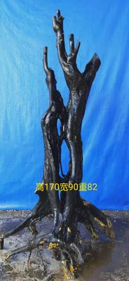 广西壮族自治区桂林市永福县金弹子 35公分以上