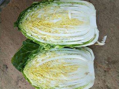 山东省潍坊市青州市黄心大白菜 3~6斤 净菜