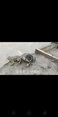 贵州省毕节市纳雍县蟾蜍