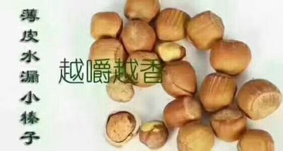 辽宁省沈阳市于洪区榛子 6-12个月 散装