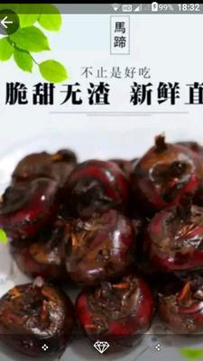 安徽省合肥市庐江县无为马蹄 特大号