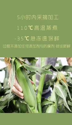黑龙江省双鸭山市宝清县冻糯米