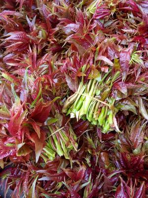 四川省达州市大竹县红油香椿芽 混装通货
