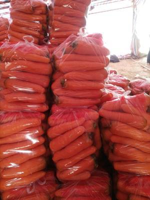 河南省开封市通许县三红胡萝卜 15cm以上