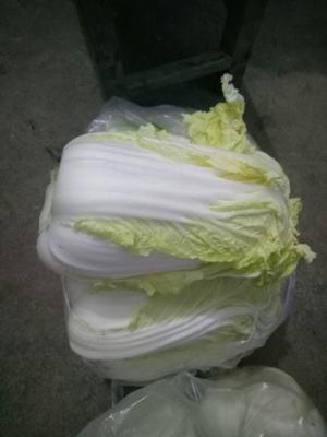 河南省周口市太康县黄心娃娃菜 10两以上