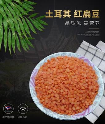 河北省沧州市任丘市土耳其小红扁豆