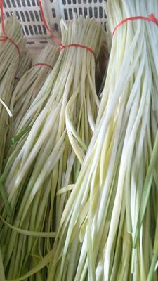 这是一张关于弥勒韭黄 二茬 40~50cm的产品图片