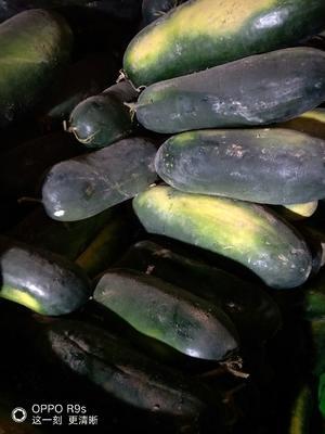 新疆维吾尔自治区塔城地区沙湾县黑将军 10~20斤 地冬瓜