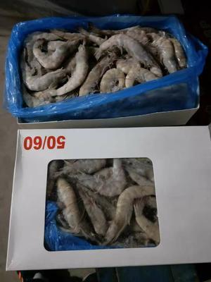 河北省沧州市沧县冻虾
