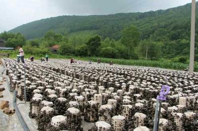 吉林省延边朝鲜族自治州敦化市干秋耳 1年以上