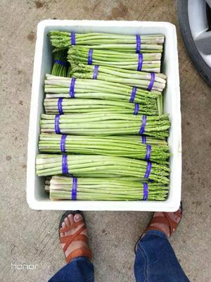 广西壮族自治区北海市海城区绿芦笋 混装通货