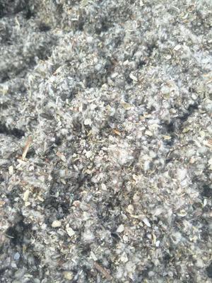 新疆维吾尔自治区巴音郭楞蒙古自治州库尔勒市废食用菌棒