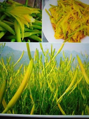 山西省忻州市原平市大同黄花菜 散装 二级
