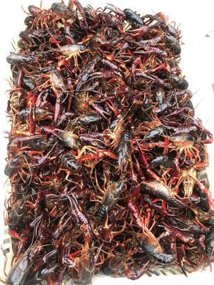 湖南省长沙市芙蓉区苏州太湖大闸蟹 2.0两以下 母蟹