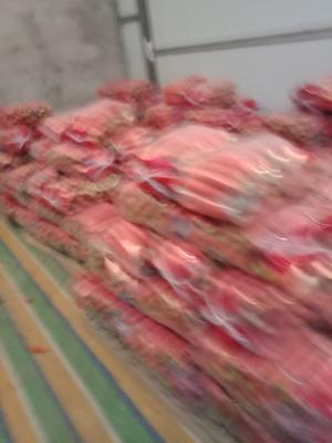 陕西省渭南市大荔县秤杆红萝卜 15cm以上