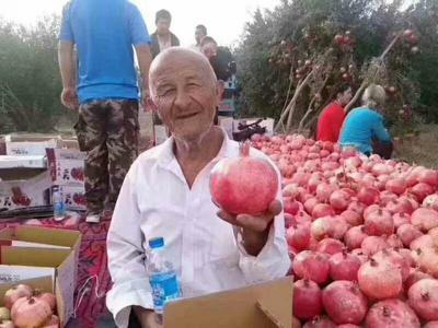 新疆维吾尔自治区和田地区墨玉县喀什石榴 0.6 - 0.8斤