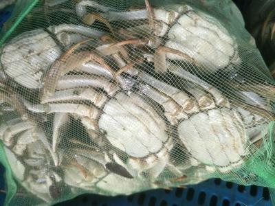 江苏省泰州市兴化市阳澄湖大闸蟹 2.5两 母蟹