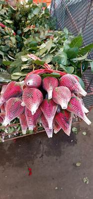 广东省广州市荔湾区红玫瑰