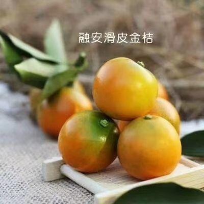广西壮族自治区柳州市融安县滑皮金桔 4-5cm 1两以下