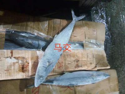 广西壮族自治区北海市海城区冻品海鱼