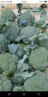 这是一张关于优秀西兰花 2.0~2.5斤 20~25cm的产品图片