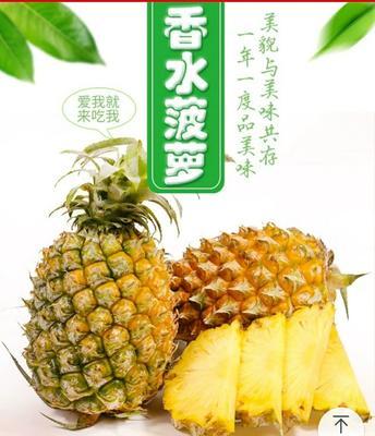 广西壮族自治区南宁市兴宁区香水菠萝 2 - 2.5斤