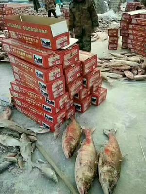 吉林省松原市前郭尔罗斯蒙古族自治县小银鱼  查干湖野生胖头鱼