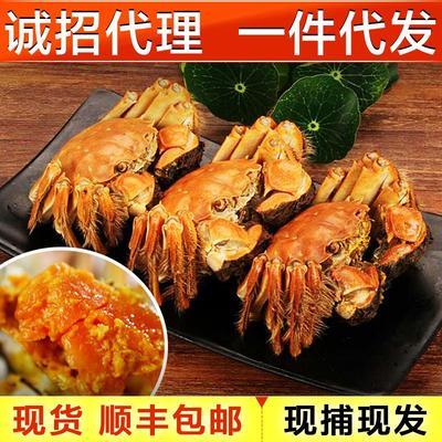 福建省漳州市东山县兴化大闸蟹 2.0两以下 统货